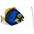 Swimming Powder Blue Surgeon Fish